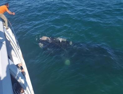 Whale_Watching_Hermanus
